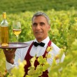 Wine waiter in the middle of vineyards — Stock Photo #9289901