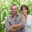 Stock Photo: Couple in front of corn plants