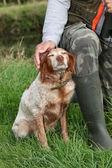 Człowiek polowania i pieszcząc jego pies — Zdjęcie stockowe