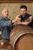 Iki adam şarap kalitesini denetleme — Stok fotoğraf