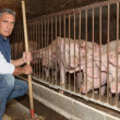 Mfeeding pigs — Stock Photo #9323463