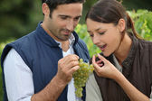 Winegrowers with bunch of grapes — Stock Photo
