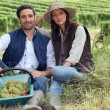Stock Photo: Couple of winegrowers