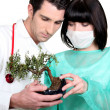 Doctor and nurse looking at bonsai — Stock Photo