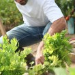 Stock Photo: Mworking in garden