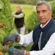 Royalty-Free Stock Photo: Winegrower