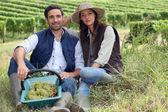 Couple of winegrowers — Stock Photo