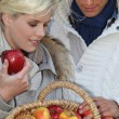 Couple picking apples — Stock Photo #9604662