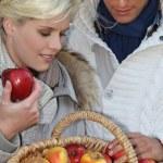 Couple picking apples — Stock Photo