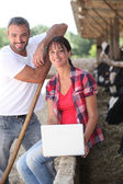 Livestock farm workers — Stock Photo