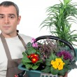 Stock Photo: Basket gardener plants