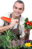 Male gardener potting plants — Stock Photo