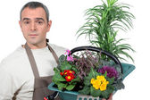 Basket gardener plants — Stock Photo