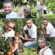 Foto Stock: Vegetable gardener