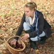 Blonde woman picking chestnuts — Stock Photo