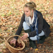 Royalty-Free Stock Photo: Blonde woman picking chestnuts