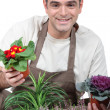 Stock Photo: Gardener with his plants