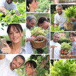 Collage of a couple in their garden — Stock Photo