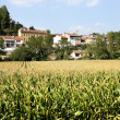 Village surrounded by a crop field — Stock Photo