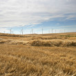 Stock Photo: Rural wind farm