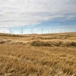 Rural wind farm — Stock Photo