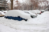 Cars Covered in Snow — Stock fotografie