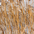 Stock Photo: Background of sedge