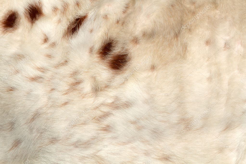 Fur or hide of a Longhorn for animal background — Stock Photo #10697874