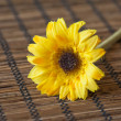 Marigold Flower on wood texture and background - Stock Photo