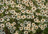 Kwiaty tło i tekstura — Zdjęcie stockowe
