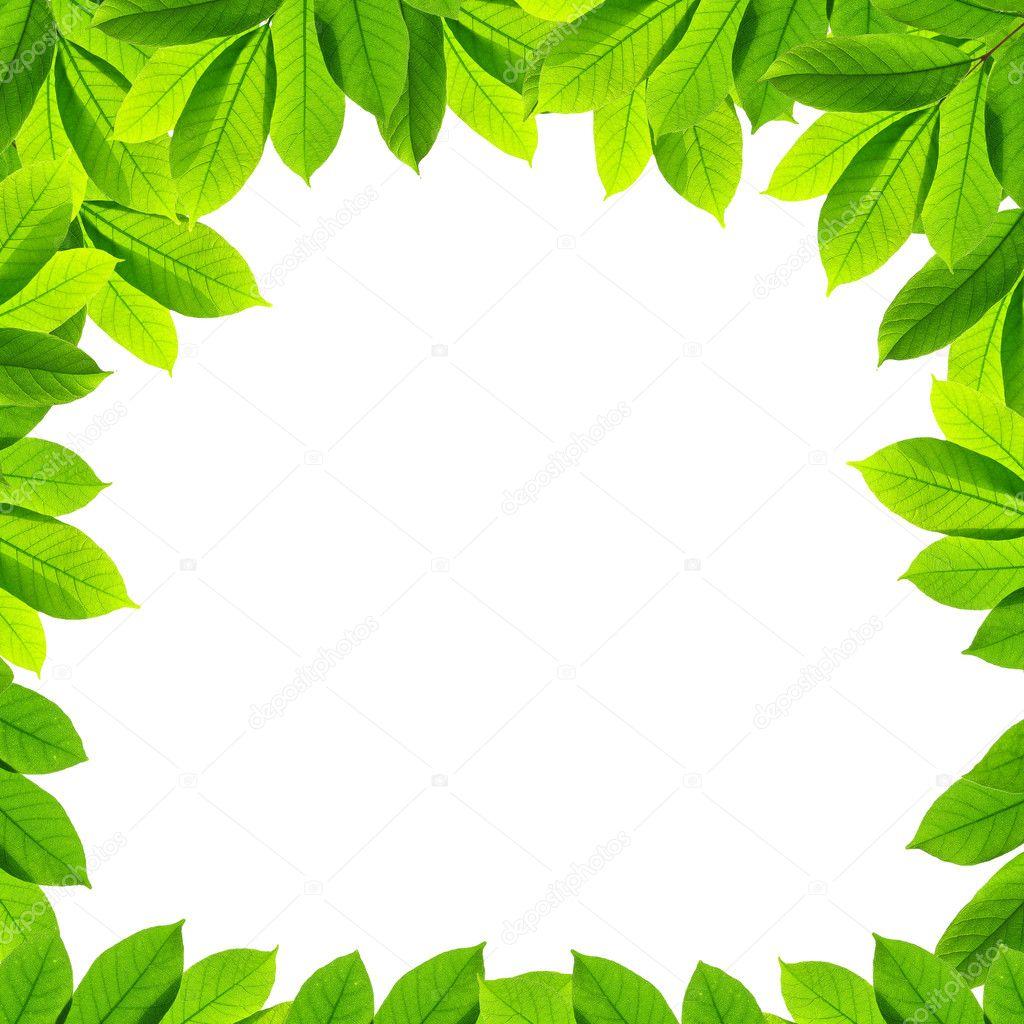 Hojas de color verde sobre fondo blanco marco foto de - Color verde hoja ...