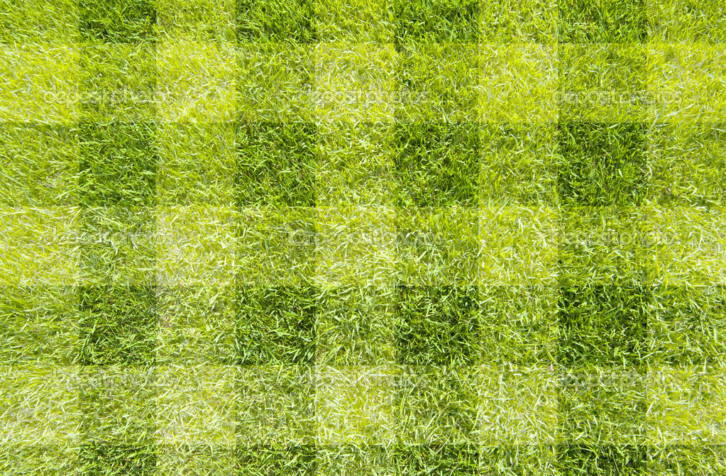 Green grass texture and background  Stock Photo #10719956