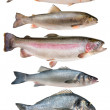Stock Photo: Fish collection