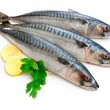 Mackerel Fish — Stock Photo #8929206