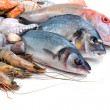Fresh catch — Stock Photo
