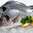 Gilthead (Sparus aurata) on ice — Stock Photo