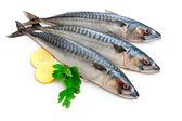 Makrele fisch — Stockfoto