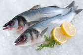 Seabass on ice — Stock Photo