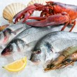 Seafood on ice — Stock Photo #9177682
