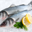 Seabass (Dicentrarchus labrax) on ice — Stock Photo