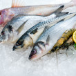 Seafood on ice - Stock Photo