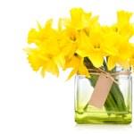 Постер, плакат: Daffodils