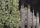 Christmas Tree and Cathedral, Milan — Stock Photo