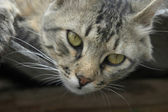 The cat looks directly in a lens — Стоковое фото