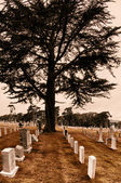 SF Military Cemetery — Stock Photo