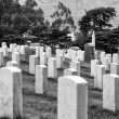 SF Military Cemetery — Stock Photo #8656807