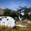 Lonely spoted rock - Stock Photo