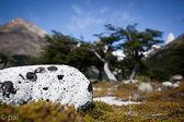 Solitário spoted rocha — Foto Stock