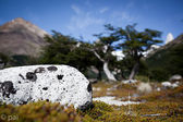 Lonely spoted rock — Stock Photo