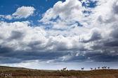 Guanacos in patagonia 2 — Stock Photo